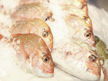Fresh Small Snapper Fish Canberra